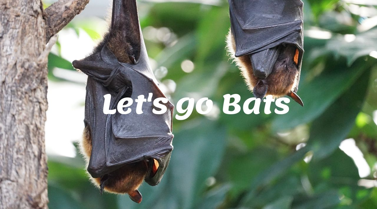 [Reading Cambridge 7]: Let's go Bats